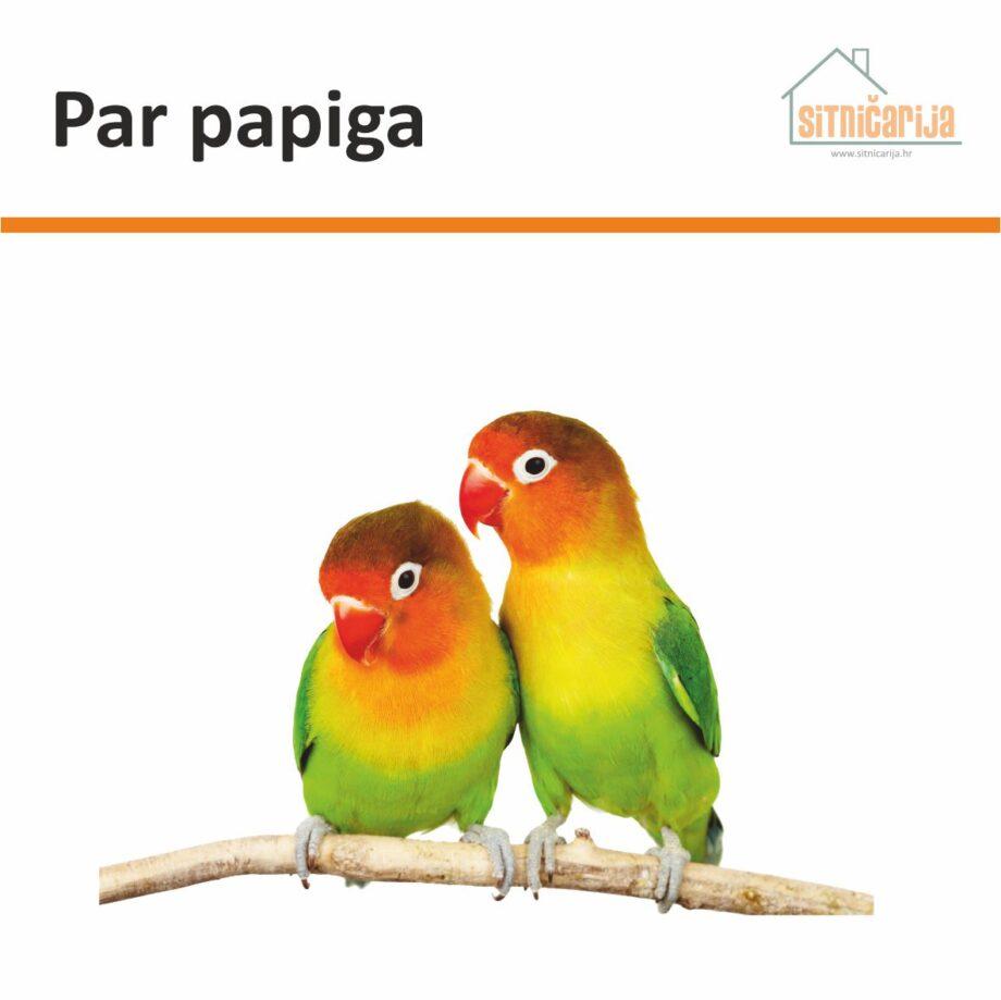 Naljepnica za prozore prikazuje par žuto-crveno-zelenih papigica koje stoje na grani